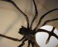 Světlo pavouk